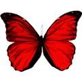 ButterflyKisses21