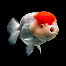 fishfish126