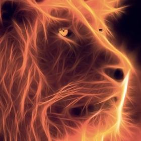 NH_Lion12