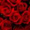 RosesAreNice