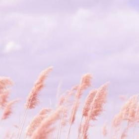 Marshmellowlavender
