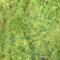 plantsandstuff