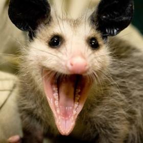 Cynical_Possum